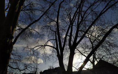 Avenir sombre pour les arbres du square Delhaye ?